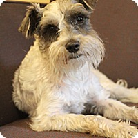 Adopt A Pet :: Gunner - Hamburg, PA