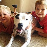 Adopt A Pet :: Roxanne - Kirkland, WA