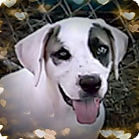 Adopt A Pet :: Kerry - Leming, TX