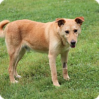 Adopt A Pet :: Brody - Prince Frederick, MD