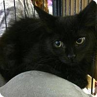 Adopt A Pet :: PeeWee - Hamilton, ON