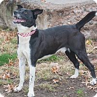Adopt A Pet :: Pepper - Elmwood Park, NJ