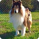 Adopt A Pet :: Senior Care Program - Beau