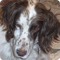 Adopt A Pet :: TARA - Pine Grove, PA