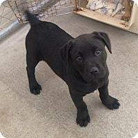 Adopt A Pet :: Jet - Daleville, AL