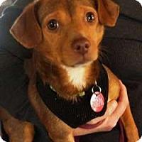 Adopt A Pet :: Tidbit - Sudbury, MA