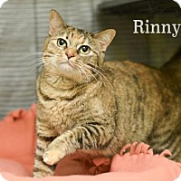Adopt A Pet :: Rinny - West Des Moines, IA