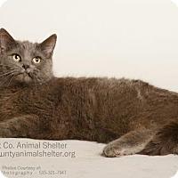 Adopt A Pet :: Gigi - Estherville, IA