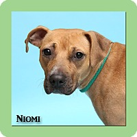 Retriever (Unknown Type)/Pit Bull Terrier Mix Dog for adoption in Aiken, South Carolina - Niomi