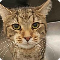Adopt A Pet :: PEANUT - Pittsburgh, PA