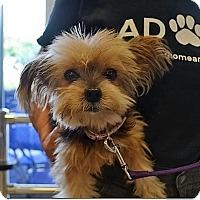 Adopt A Pet :: Taffy - Tavares, FL