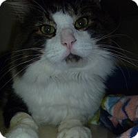 Adopt A Pet :: Butchie - Hamburg, NY