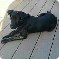 Adopt A Pet :: Gunner - Willingboro, NJ