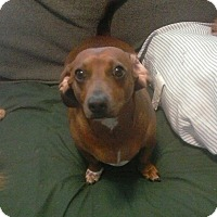 Adopt A Pet :: Maryann - Inverness, FL