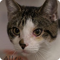 Adopt A Pet :: Allen - Gulfport, MS