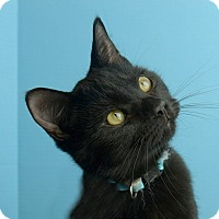 Adopt A Pet :: Salem - Columbia, IL
