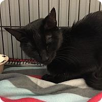Adopt A Pet :: Nova - Newburgh, IN