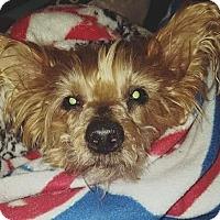 Adopt A Pet :: Max - Bucks County, PA
