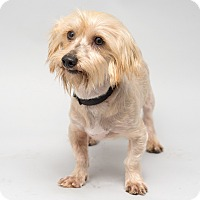 Adopt A Pet :: Titan - Westfield, NY