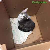 Adopt A Pet :: DUSTYOVSKY - Cliffside Park, NJ