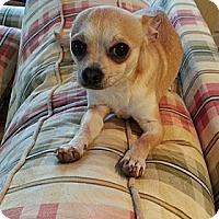 Adopt A Pet :: Petey - Dayton OH - Dayton, OH