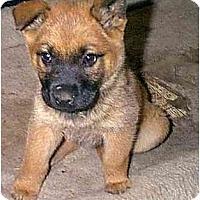 Adopt A Pet :: RUBY-D - dewey, AZ