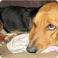 Adopt A Pet :: Staephanie - Phoenix, AZ
