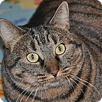 Adopt A Pet :: Chrystal - Foothill Ranch, CA
