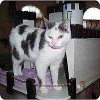 Adopt A Pet :: Bella - Hamburg, NY