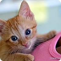 Adopt A Pet :: Pumpkin - Island Park, NY