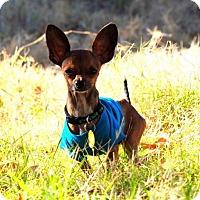 Adopt A Pet :: Mario - Chandler, AZ