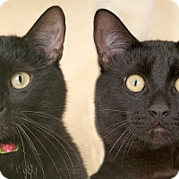 Adopt A Pet :: Moon and Midnight - Chicago, IL