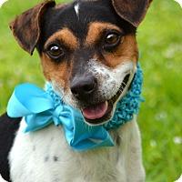 Adopt A Pet :: Lucky - Miami, FL