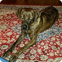 Adopt A Pet :: Nala - Chatham, VA
