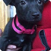 Adopt A Pet :: Barbie - Sudbury, MA