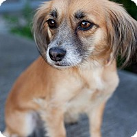Adopt A Pet :: Lalane - San Diego, CA