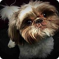 Adopt A Pet :: MAX - Murray, UT