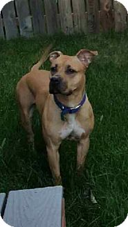 American Pit Bull Terrier Mix Dog for adoption in Anchorage, Alaska - Mia