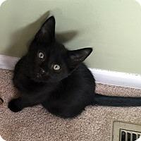 Adopt A Pet :: Lucky - Troy, MI