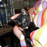 Adopt A Pet :: Waldo - Middletown, CT