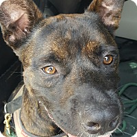 Adopt A Pet :: Blake - Everett, WA