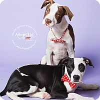 Adopt A Pet :: Petey and Tracker - Apache Junction, AZ