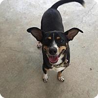 Adopt A Pet :: Drama - Longview, TX