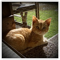 Adopt A Pet :: MAGOO - Medford, WI