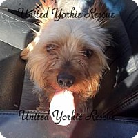 Adopt A Pet :: Wrigley - Skokie, IL