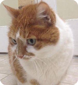 Domestic Shorthair Cat for adoption in Cloquet, Minnesota - Elma Mae