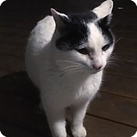 Adopt A Pet :: Max - Caro, MI