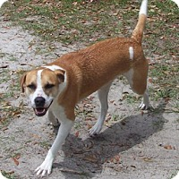 Adopt A Pet :: Chloe - Morriston, FL