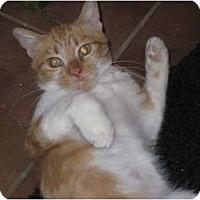 Adopt A Pet :: Daisy - Warren, OH