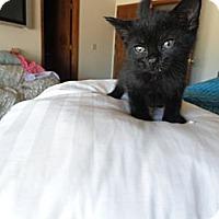 Adopt A Pet :: Bitsy - Phoenix, AZ